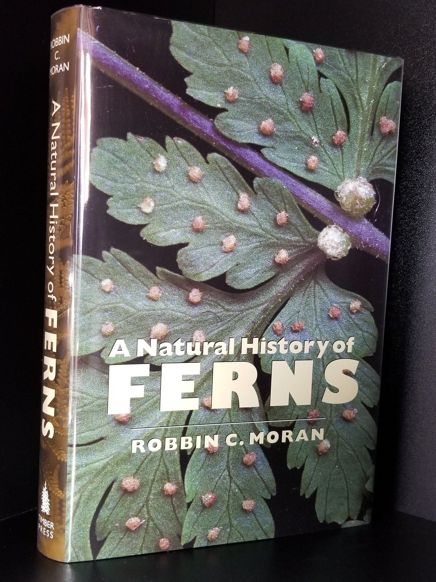 Image for A Natural History of Ferns.